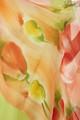 Палантины из натурального шелка (цветовая гамма)